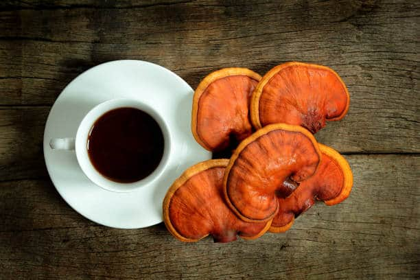 reishi mushroom health benefits tea