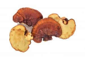 Brain mushrooms: Reishi